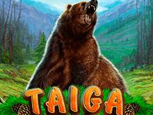 Taiga — игровой автомат на реальные деньги